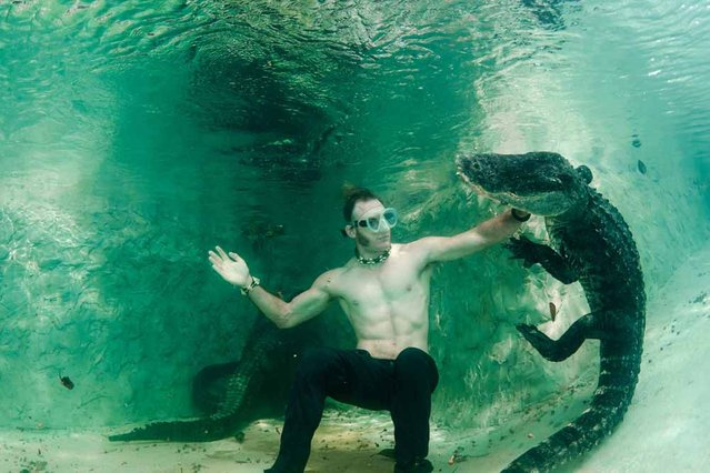 Underwater photographer John Chapa gets up close with a wild alligator on his first ever dive with the animals. (Photo by John Chapa/Barcroft Media)