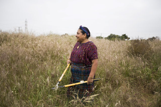 Indigenous Guatemalan Nobel Peace laureate Rigoberta Menchu holds a bypass looper shear while working in a habitat preservation and native plant restoration project for endangered burrowing owls with Google employees in Mountain View, California April 20, 2015. (Photo by Stephen Lam/Reuters)