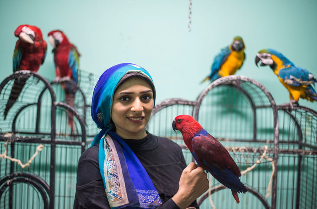Birds trainer Nada Abdullah holds a parrot at the Parrot Academy in Cairo, Egypt, 08 August 2019. Parrot Academy was established in 2013 as the first dedicated parrot training academy in Egypt that offers training for parrots and other feathered-and-winged creatures. The academy also acts as a hotel for travelling bird-owners, and has a store with different types of toys for parrots. According to trainer Nada Abdullah, the academy do not teach parrots to talk, but more to control their vocals, train the bird not to bite or attack humans as well as helping the owners to understand and interact with their birds. (Photo by Mohamed Hossam/EPA/EFE)