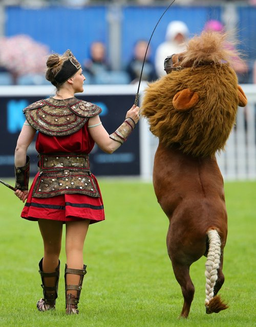 2014 Discover Ireland Dublin Horse Show, RDS, Ballsbridge, Dublin, August 8, 2014. Luma the Lion Horse, a miniature eight year old pony with Melie Philippot. (Photo by Cathal Noonan/NPHO)