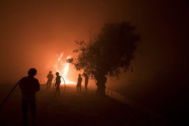 Firemen fight a forest fire near Sao Simao, Sardoal municipality, Portugal, 24 August 2016. 677 firemen and 215 land vehicles are working as of late 23 August 2016 to extinguish the fire. (Photo by Paulo Cunha/EPA)