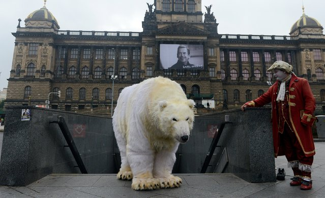 A street performer looks on as a Greenpeace activist dressed like a polar bear poses in front of the National Theatre on October 13, 2014 in Prague, Czech Republic. Greenpeace activists campaigned against an experimental research oil drilling of Shell Oil Company in the Arctic. (Photo by Michal Cizek/AFP Photo)
