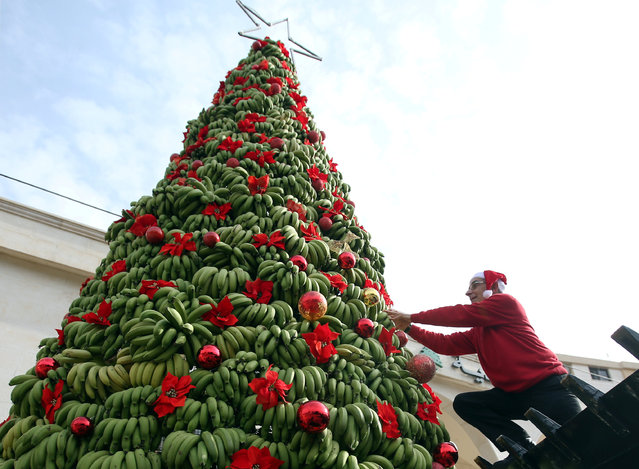 A man decorates a Christmas tree made of bananas in Damour area, south of Beirut, Lebanon, December 19, 2017. (Photo by Ali Hashisho/Reuters)