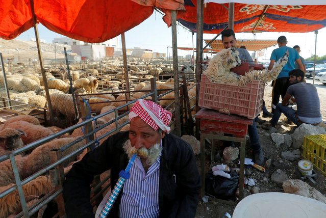 A vendor waits for customers at a livestock market, ahead of the Eid al-Adha festival, in Amman, Jordan September 11, 2016. (Photo by Muhammad Hamed/Reuters)