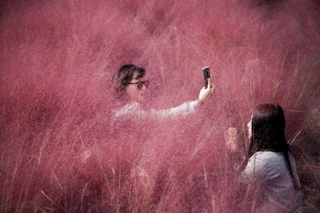 A woman takes a selfie as her friend adjusts her makeup in a pink muhly grass field amid the coronavirus disease (COVID-19) pandemic at a park in Hanam, South Korea, October 13, 2020. (Photo by Kim Hong-Ji/Reuters)
