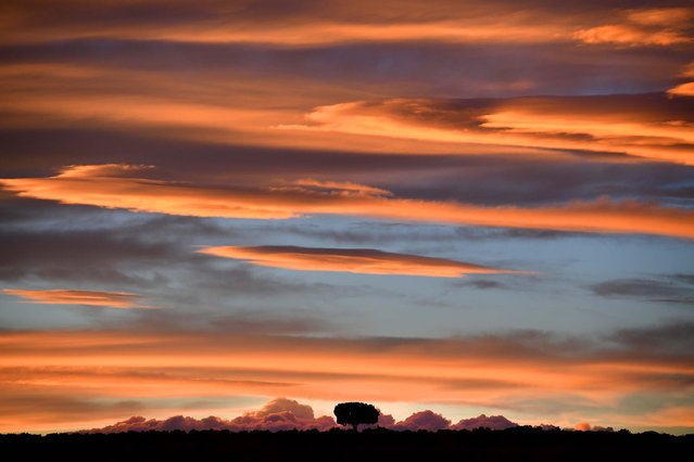 The sunsets over a lone tree on a ridge in Bears Ears National Monument June 10, 2017 near Moab, UT. (Photo by Katherine Frey/The Washington Post)