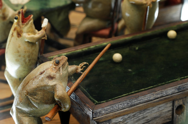 A frog playing pool is pictured at the Frog Museum, a collection of 108 stuffed frogs in scenes portraying everyday life in the 19th-century and made by Francois Perrier, in Estavayer-le-Lac, Switzerland on November 7, 2018. (Photo by Denis Balibouse/Reuters)euters)