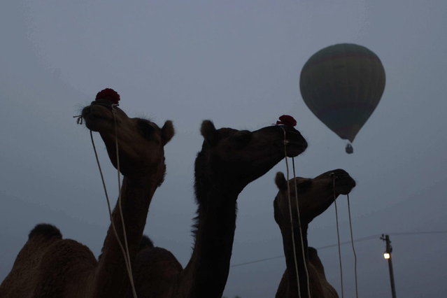 A hot air balloon flies over camels during the annual cattle fair in Pushkar, in the western Indian state of Rajasthan, Sunday, November 10, 2013. (Photo by Ajit Solanki/AP Photo)