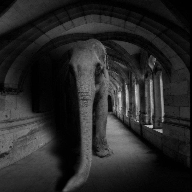 """""""Un éléphant ça trompe....."""" (Photo and caption by Yves Lecoq)"""