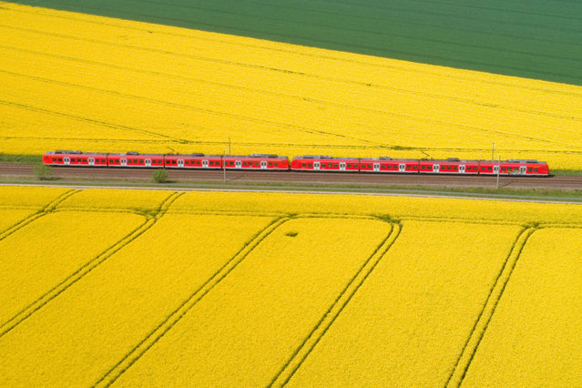 A train makes his way trough rapeseed fields in Lemmie, Germany, April 30, 2019. (Photo by Julian Stratenschulte/dpa via AP Photo)