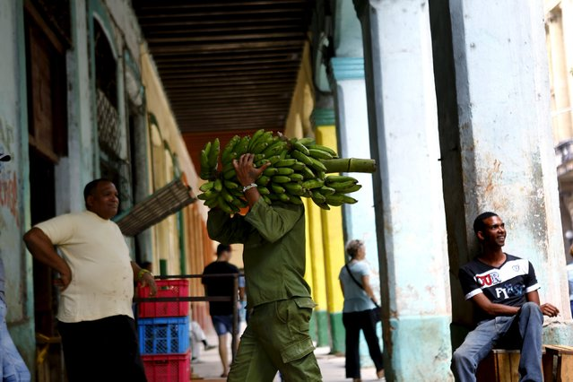 A man carries bananas to a warehouse in Havana, March 23, 2016. (Photo by Ivan Alvarado/Reuters)