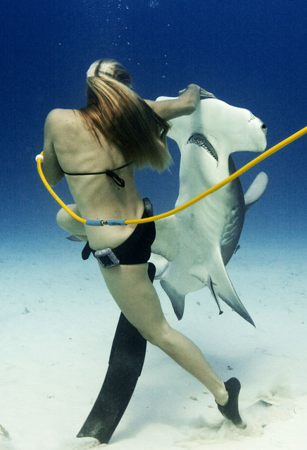 Liz swimming with Hammerheads in the Bahamas, Bimini. (Photo by Jeremy Farris/Caters News)