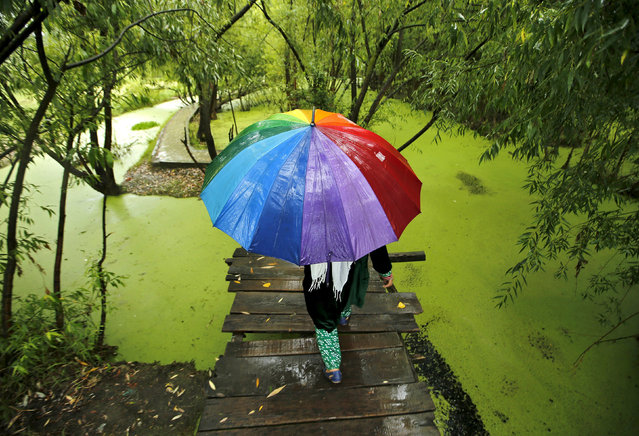 A Kashmiri woman walks on a footbridge as it rains in Srinagar, June 24, 2015. This year's monsoon rains in India are officially forecast to be only 88 percent of the long-term average. (Photo by Danish Ismail/Reuters)
