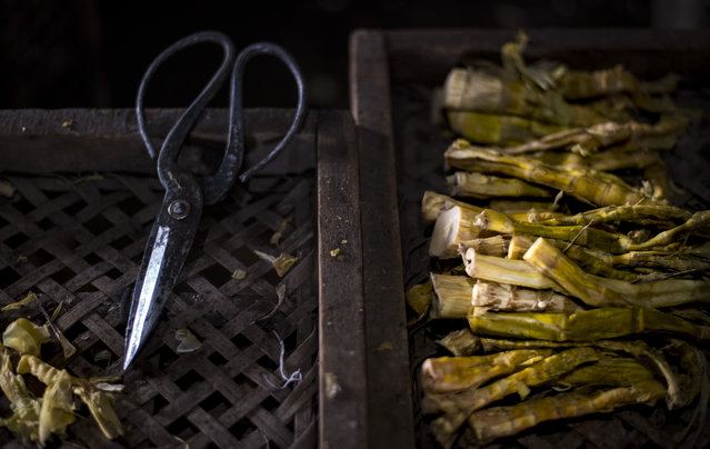 This picture taken on April 12, 2017 shows a pair of scissors and dried bamboo shoots in a drying factory in Taihuyuan near the city of Lin'an, Zhejiang Province. (Photo by Johannes Eisele/AFP Photo)