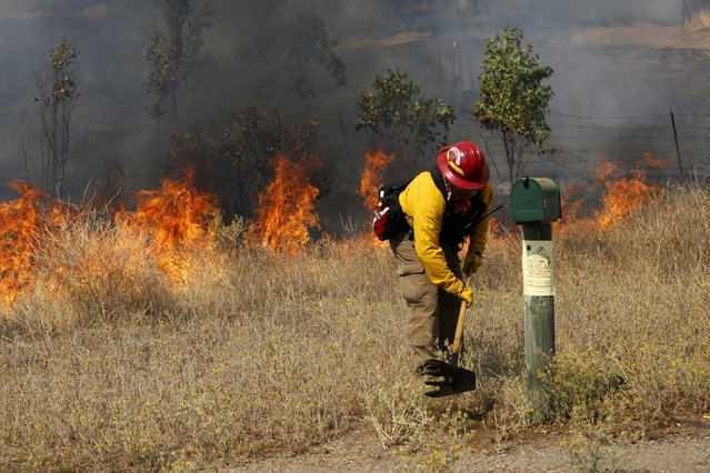 A firefighter clears dried vegetation from a property along Morgan Valley Road as the so-called Jerusalem Fire erupts in Lake County, California, August 12, 2015. (Photo by Robert Galbraith/Reuters)