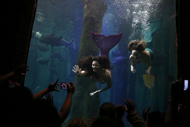 Mermaids pose for spectators in Sao Paulo Aquarium, in Sao Paulo, Brazil June 8, 2017. (Photo by Pilar Olivares/Reuters)