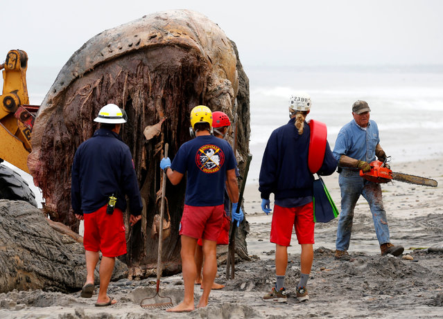 A worker uses a chainsaw as Encinitas lifeguards work to remove the carcass of a large humpback whale that washed ashore in Leucadia, California, United States, July 18, 2016. (Photo by Mike Blake/Reuters)