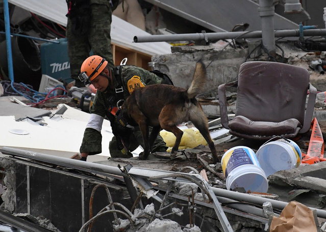 A rescue dog searches for survivors in Mexico City on September 23, 2017, four days after the powerful quake that hit central Mexico. (Photo by Pedro Pardo/AFP Photo)