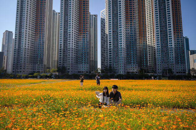 People pose for photos among a field of cosmos flowers in a car park before high-rise apartment buildings in Goyang, west of Seoul on September 22, 2020. (Photo by Ed Jones/AFP Photo)