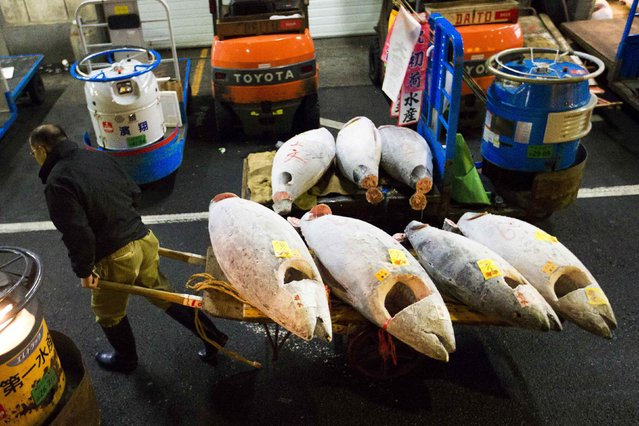 A man hauls frozen tuna after the New Year's auction at the Tsukiji fish market in Tokyo January 5, 2015. (Photo by Thomas Peter/Reuters)