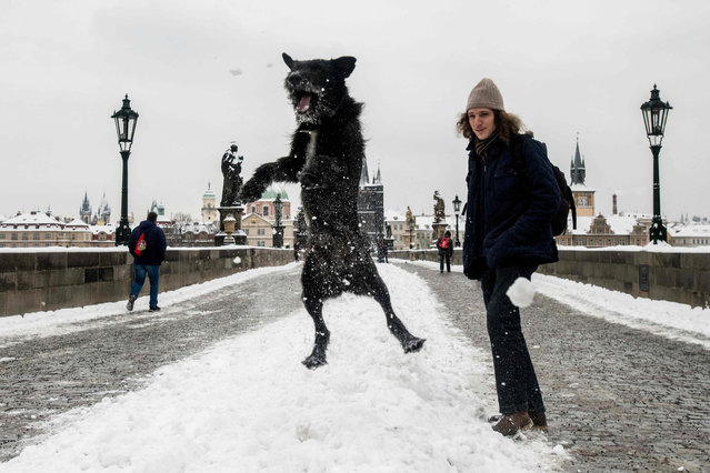 A dog jumps on the Charles Bridge after a snowfall, in Prague, on February 9, 2021 Heavy snowfall across the Czech Republic has disrupted rail, road and public transport. (Photo by Michal Cizek/AFP Photo)