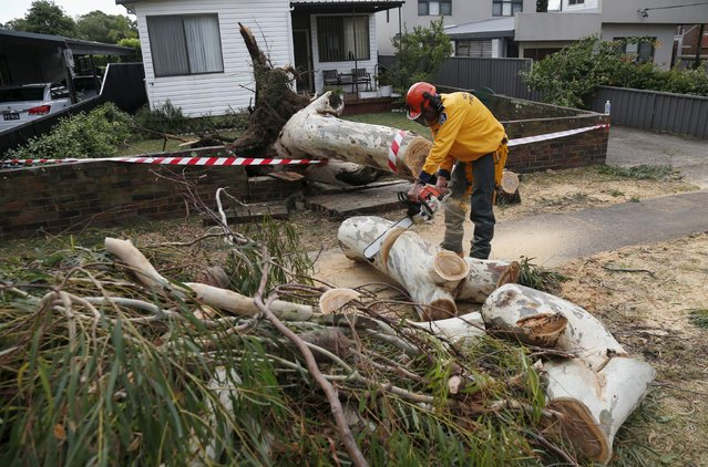 An emergency worker chainsaws a tree that destroyed a wall following a tornado in the Sydney suburb of Kurnell, December 16, 2015. (Photo by Jason Reed/Reuters)