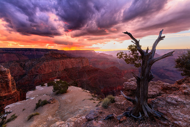 The sky above the canyon is awash with colours after a heavy storm on September 7, 2015 in Grand Canyon, Arizona. (Photo by Mike Olbinski/Barcroft Media)