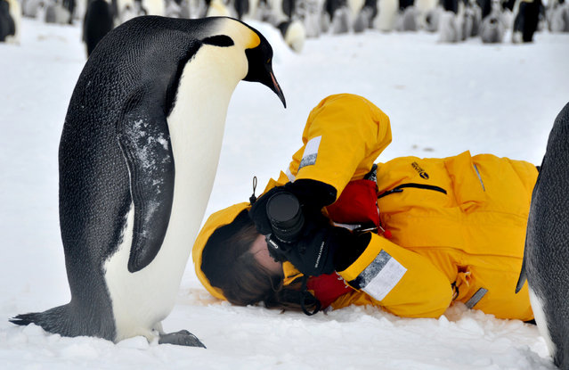 Dafna Ben Nun and an Emperor penguin. (Photo by Dafna Ben Nun/Caters News)