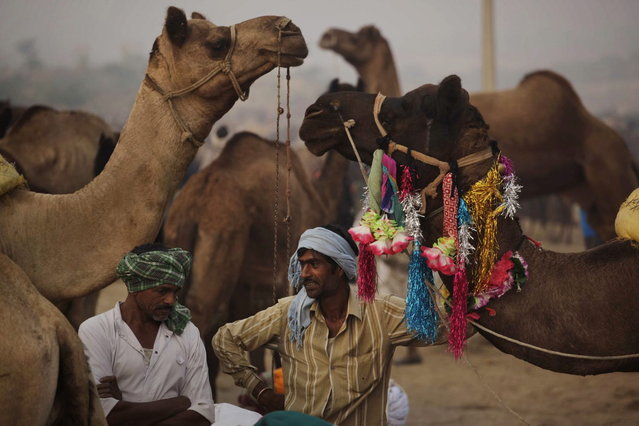 Indian camel herders stand with their camels during the annual cattle fair in Pushkar, in the western Indian state of Rajasthan, Sunday, November 10, 2013. (Photo by Ajit Solanki/AP Photo)