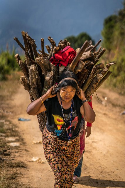 Woman from the Chin tribe carrying fire wood in, Mindat, Myanmar, November 2016. (Photo by Teh Han Lin/Barcroft Images)