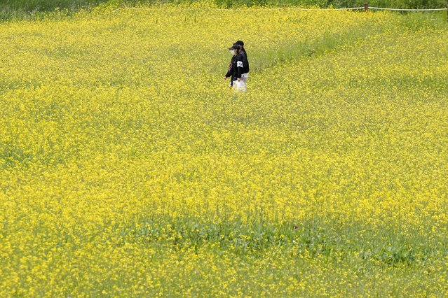 Visitors wearing face masks as a precaution against the coronavirus walk through a field of flowers at a park in Paju, South Korea, Tuesday, May 25, 2021. (Photo by Lee Jin-man/AP Photo)