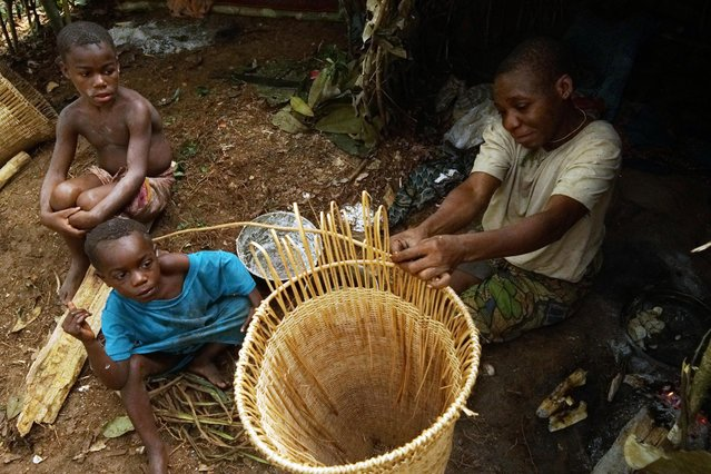 Ba'aka pygmies in their forest home, February 2016. Ba'aka split their time between village and forest. Here, in their forest home, traditional life continues in the face of multiplying challenges ranging from poachers, to ill health. (Photo by Susan Schulman/Barcroft Images)