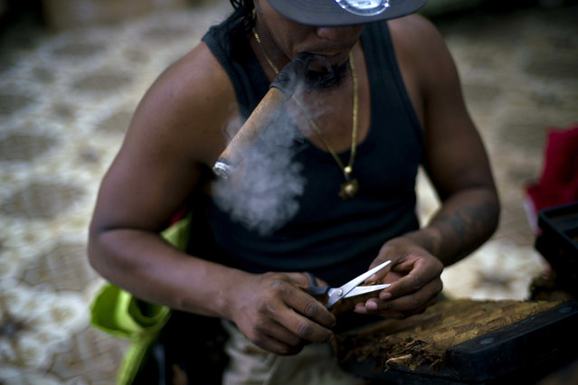 A roller puffs on a cigar while working at La Corona cigar factory in Havana, Cuba, March 2, 2017. Exports of Cuban stogies reached more than 430 million US dollars per year in 2016, with demand increasing both nationally and worldwide. (Photo by Ramon Espinosa/AP Photo)