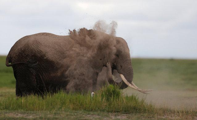 An elephant soils its body as it walks in the Amboseli National Park, southeast of Kenya's capital Nairobi, April 25, 2016. (Photo by Thomas Mukoya/Reuters)