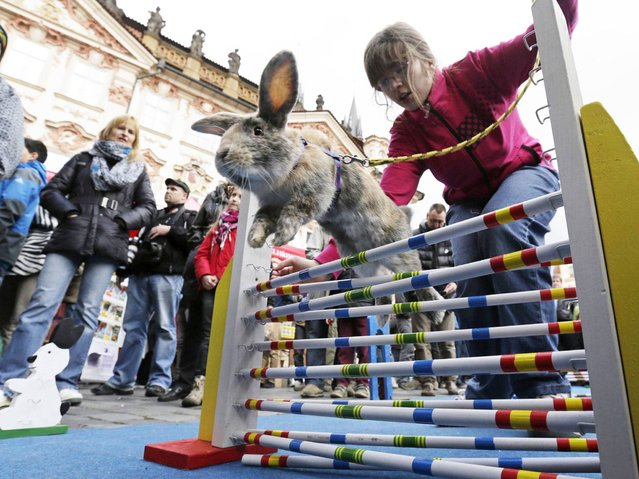 People look at a rabbit jumping over an obstacle at the traditional Easter market at the Old Town Square in Prague. (Photo by David W. Cerny/Reuters)