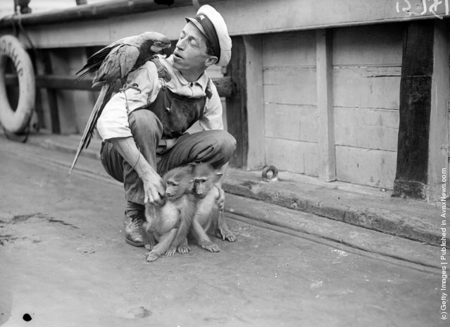 1929: A pet macaw and two baboons on board the Friendship