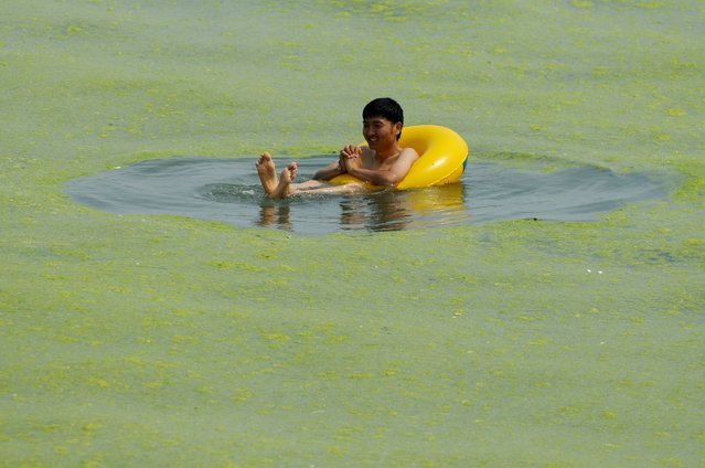 This picture taken on July 15, 2015 shows a man floating in the waters filled with algae at a beach in Qingdao, in eastern China's Shandong province. The algal phenomenon, an annual occurrence in Qingdao, is usually caused by an abundance of nutrients in the water, especially phosphorus, although the triggers for the enormous blooms which began to appear in the Yellow Sea in 2007 remain uncertain. (Photo by AFP Photo)