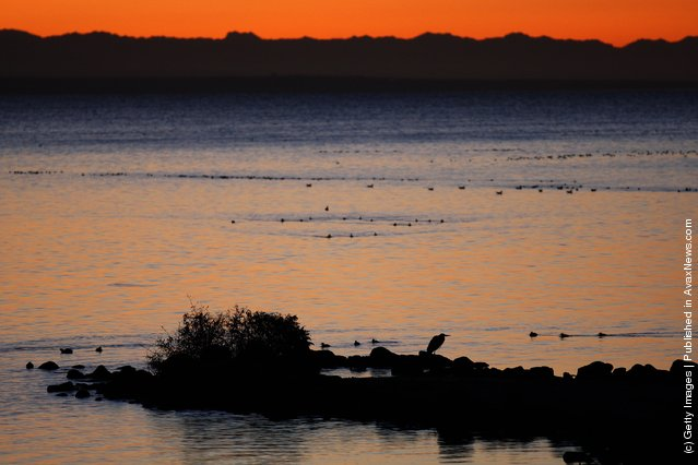 A great blue heron stands on the shore of the Salton Sea an area where a controversial development would create a new town for nearly 40,000 people on the northwest shore of the biggest lake in California, the Salton Sea