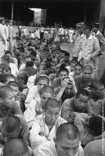 1950:  South Korean political prisoners under guard at Pusan