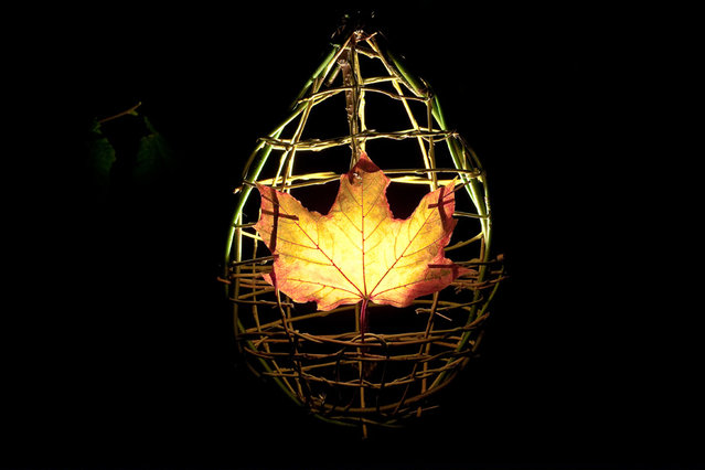 Maple Leaf Lantern