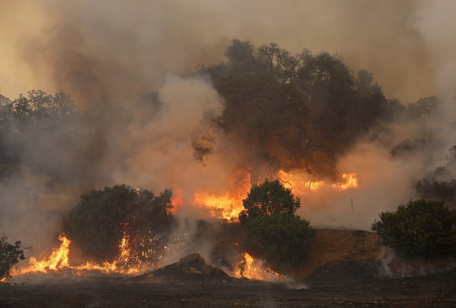 Flames from the so-called Jerusalem Fire erupt in Lake County, California, August 12, 2015. (Photo by Robert Galbraith/Reuters)