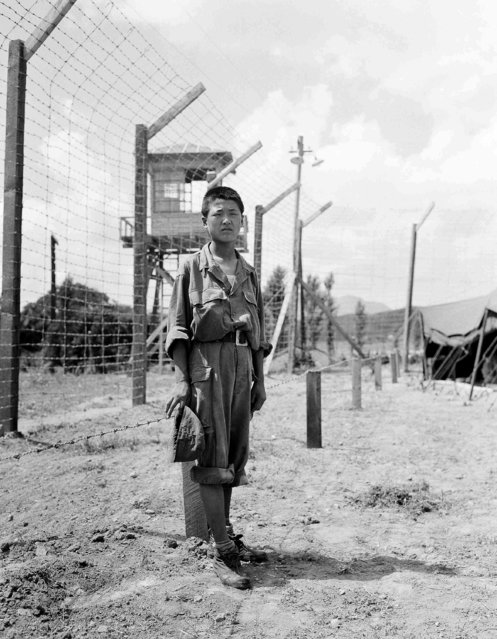 A 14-year-old North Korean prisoner, first captive to be processed in this camp, stands inside barbed-wire fence at a prisoner of war enclosure in Korea on August 28, 1950. Location unknown. (Photo by Max Desfor/AP Photo)