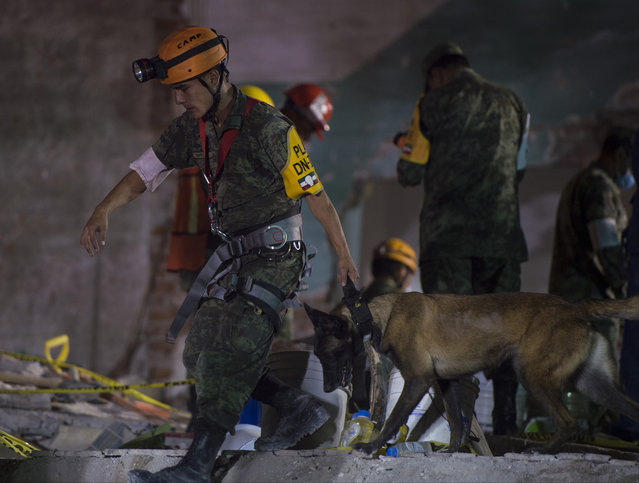 A rescuer walks with a dog to search for survivors in a collapsed building three days after the magnitude 7.1 earthquake jolted central Mexico killing more than 200 hundred people, damaging buildings, knocking out power and causing alarm throughout the capital on September 22, 2017 in Mexico City, Mexico. The earthquake comes 32 years after a magnitude-8.0 earthquake hit on September 19, 1985. (Photo by Humberto Romero/Getty Images)