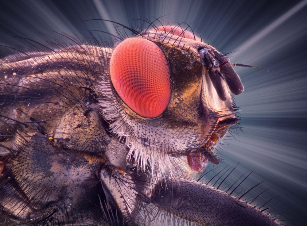 Insect Eyes by Amateur Photographer Kutub Uddin