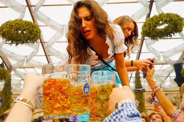 A young woman drinks beer at Hofbraeuhaus beer tent on the opening day of the 2015 Oktoberfest on September 19, 2015 in Munich, Germany. The 182nd Oktoberfest will be open to the public from September 19 through October 4and will draw millions of visitors from across the globe in the world's largest beer fest. (Photo by Johannes Simon/Getty Images)