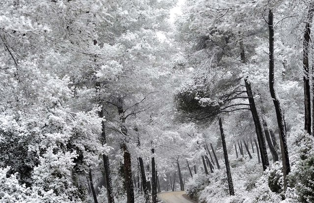 Snow covers trees in Rubi, Spain. (Photo by Manu Fernandez/Associated Press)