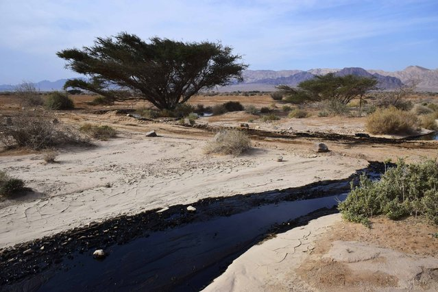 Crude oil streams through the desert in south Israel, near the village of Beer Ora, north of Eilat, December 4, 2014. Millions of liters of crude oil have gushed out of a pipeline to flood 200 acres of a desert nature reserve in southern Israel, officials said on Thursday. (Photo by Yehuda Ben Itach/Reuters)