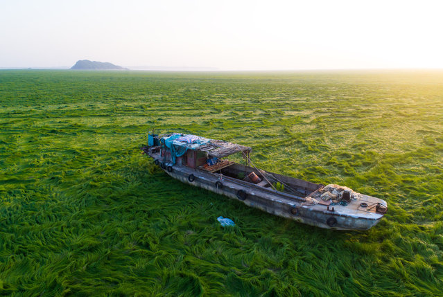 A boat is stranded on the grass-covered riverbed of the Poyang Lake hit by drought, in Duchang county, Jiujiang city, Jiangxi province, China on April 17, 2018. Poyang Lake in Jiangxi Province, once the largest freshwater lake in China, is fast drying-up and might soon become a prairie or a desert like the Aral Sea in Kazakhstan due mostly to human ignorance. Chinese scientists are reporting with alarm that more parts of Poyang Lake have dried up leaving huge swathes of grassland in areas once inundated by up to 25 meters of water. That depth has been reduced on average to only eight meters and even this level is in danger since water levels have fallen continuously. (Photo by Imaginechina/Rex Features/Shutterstock)
