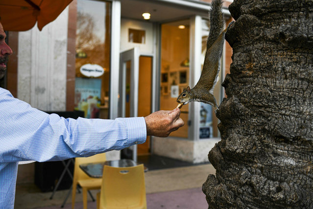A man feeds a squirrel at a shopping district in Miami Beach, on February 3, 2021. (Photo by Chandan Khanna/AFP Photo)