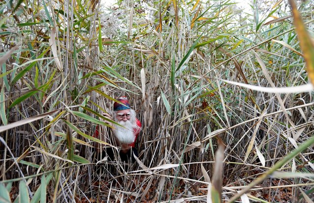 Santa Jerry Julian of Colorado Springs, Colorado hides in the grass following a ride on the Polar Express during a field trip from the Charles W. Howard Santa Claus School in Midland, Michigan, U.S. October 28, 2016. (Photo by Christinne Muschi/Reuters)